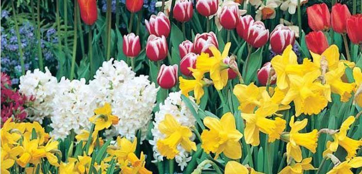 Florile de primăvară - medicament emoțional